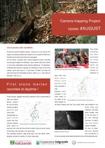 Mustelids 2015 August